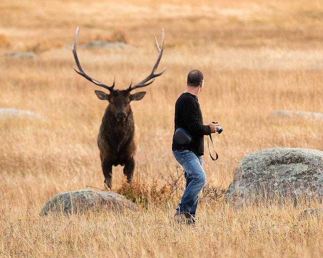 Ecotoerisme maakt wilde dieren minder alert voor gevaar   MO