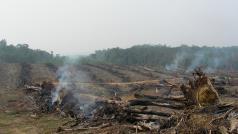 CC Rainforest Action Network