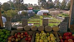 Vers fruit te koop mossimoinc (CC BY-ND 2.0)