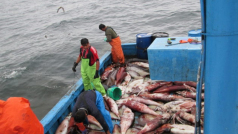 © Global Fishing Watch
