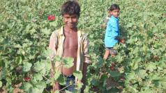© Landelijke India Werkgroep