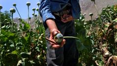 UN Photo/UNODC/Zalmai.