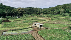© Ministerie van Landbouw, Cookeilanden