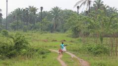 Palmolievelden in de boerengemeenschap van La Confianza