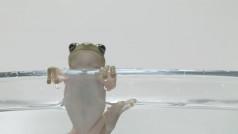 bron: Vimeo