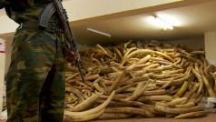 bron: Vimeo (Elephant Crisis Fund)