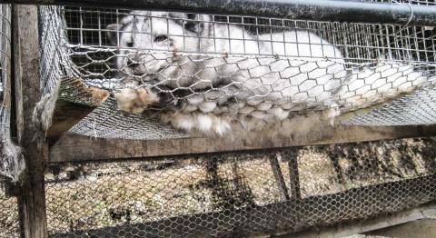 Nettverk for dyrs frihet (Network for Animal Freedom) (CC BY-NC-SA 2.0)
