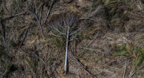 © Marizilda Cruppe/Rede Amazônia Sustentável