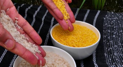 International Rice Research Institute (CC0)