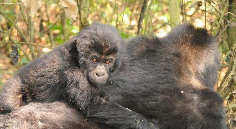© Wildlife Conservation Society (WCS)