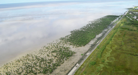 ©  Guyana Mangrove Restoration Project