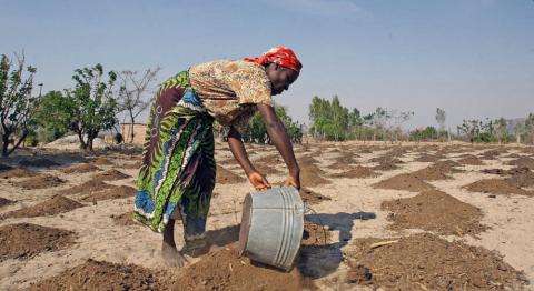 © Desmond Kwande / FAO