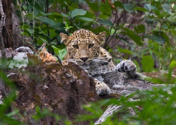 wildlife in kashmir Jammu and kashmir comprises of india's most scenically beautiful wildlife reserves due to the vast variation in geographical structure, climate and altitude, these parks are demarcated into two regions.