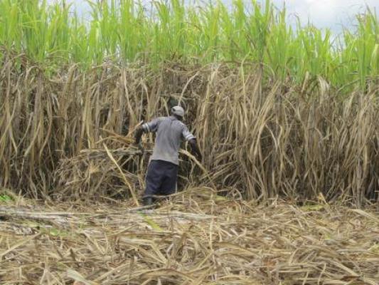 Generaties migranten uit Haïti verrichten zware arbeid op Dominicaanse suikerrietplantages