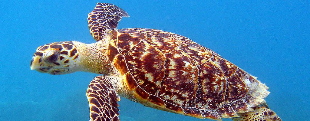 CC BY NOAA/Caroline S. Rogers