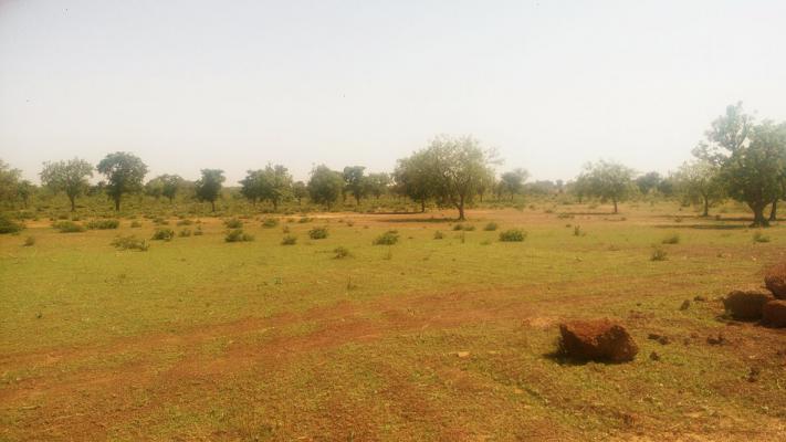 Een groen terrein