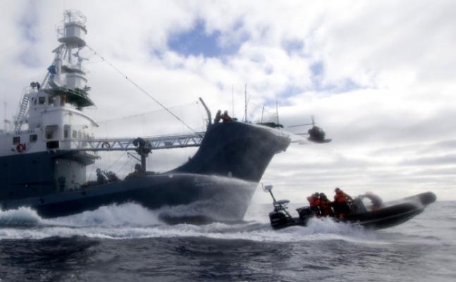 Steve Roest/Sea Shepherd Conservation Society