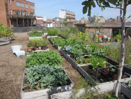 Agroparken en stadstuiniers mo magazine for Le jardin urbain garderie