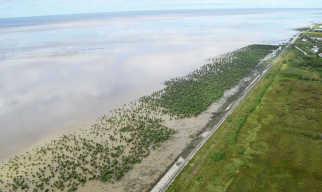 ©  Guyana Mangrove Restoration Project
