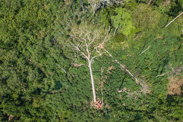 © Axel Fassio/CIFOR (CC BY-NC-ND 2.0)
