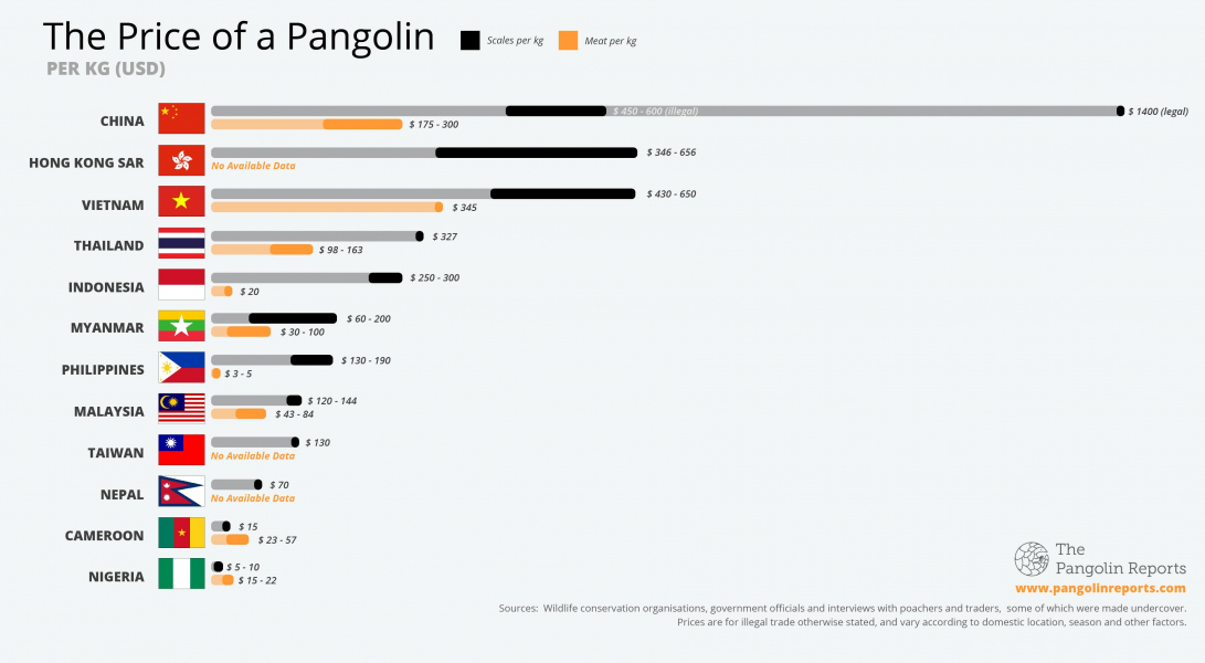 © The Pangolin Reports